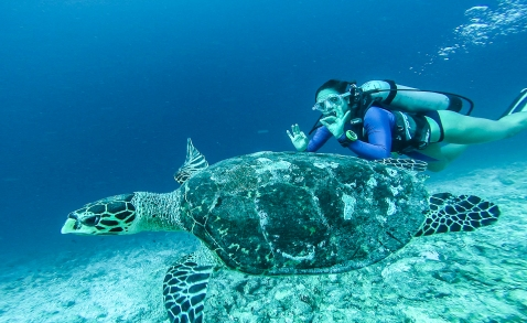 seaturtlemaldives-7-22-16-3